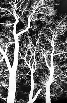 Hakon Soreide - White Silhouetted Trees