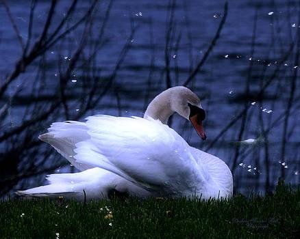Darlene Bell - White Swan
