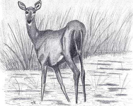 White Tail Doe in a Marsh by Tony  Nelson