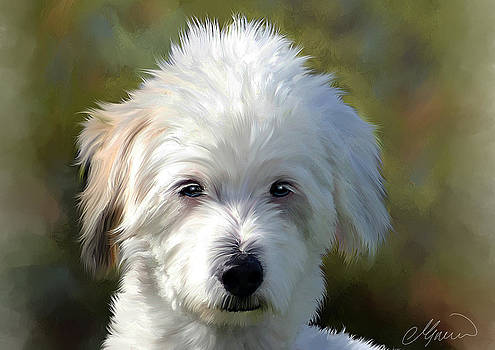 White Terrier Dog Portrait by Michael Greenaway