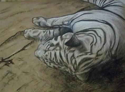 White Tiger by John Fierro