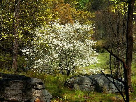 White Tree on the Mountain by Joyce Kimble Smith