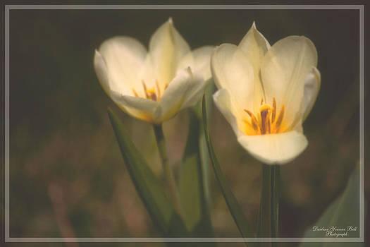 Darlene Bell - White Tulips