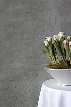 White tulips in bowl - gray concrete wall by Matthias Hauser