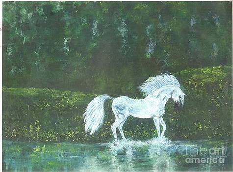 White Water Horse by Tonia Darling