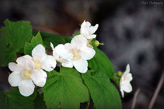 White Wildflowers by Alivia Houdek