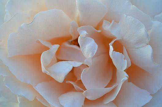 Whitest Rose by Naomi Berhane