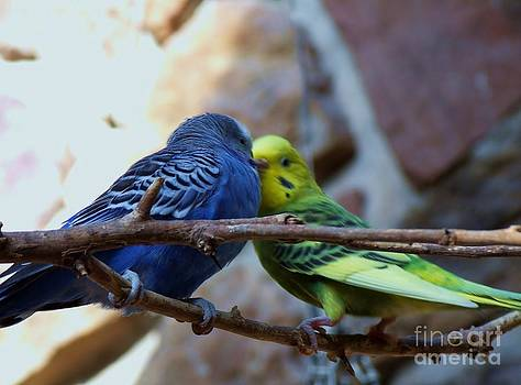 Who Says Parakeets Aren't Lovebirds by Donna Parlow