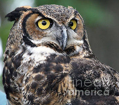 Whooooo you looking at by Patricia Molison