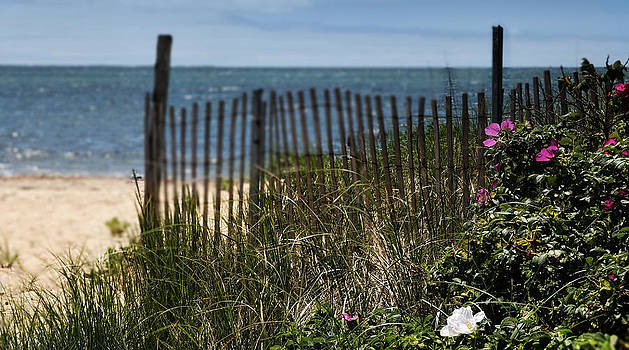 Expressive Landscapes Fine Art Photography by Thom - Wild Beach Rose - Cape Cod
