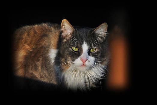 Lisa Moore - Wild Cat on the Farm