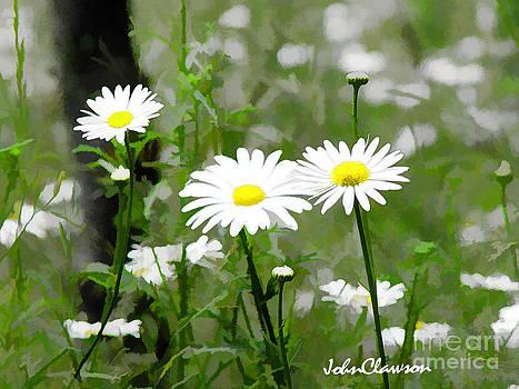 Wild Daisies by John Clawson