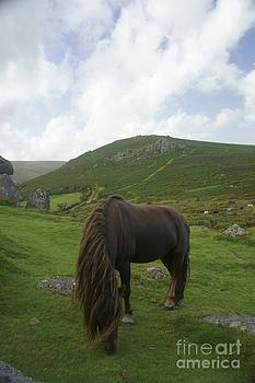 Wild Dartmoor 1 by Sally Barnett