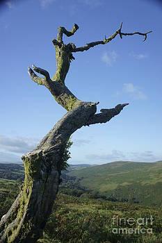 Wild Dartmoor 3 by Sally Barnett