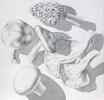 Wild Edible Mushrooms by Elizabeth Halfacre