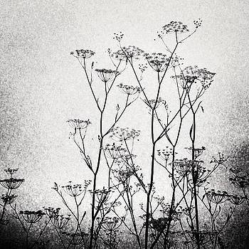 Wild Fennel #fennel by Denise Taylor