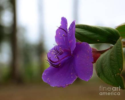 Wild Flower by Jiss Joseph
