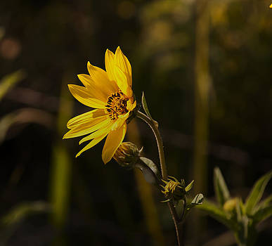 Wild Flower by Kelly Rader
