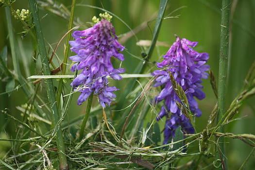Donna Walsh - Wild Flowers in Vermont
