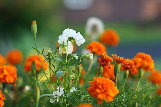 Wild Flowers by Leontine Vandermeer