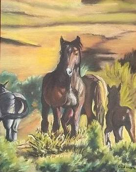 Wild Horses in Indio Desert by Terry Godinez
