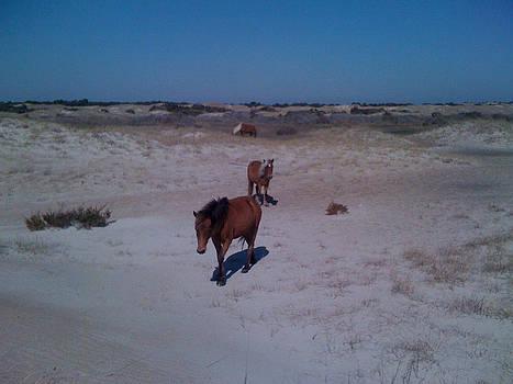 Wild Horses of Shackleford Banks by Tanya Moody