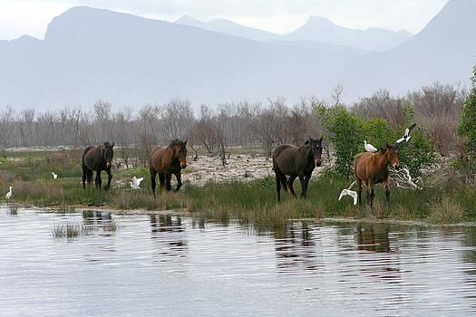 Deborah Hall Barry - Wild Horses of South Africa