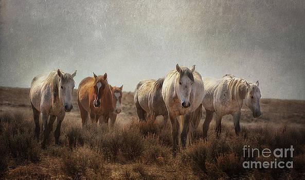 Wild Horses Roam by Heather Swan