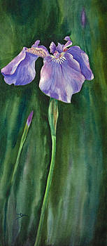 Dee Carpenter - Wild Iris I