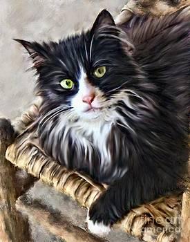 Wild Kitty by Dawn Serkin