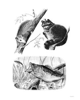 Wild Life Sketches by Michael Welch