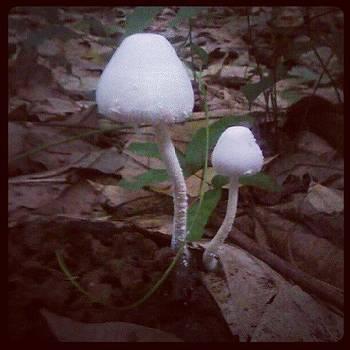 Wild mushroom by Nawarat Namphon