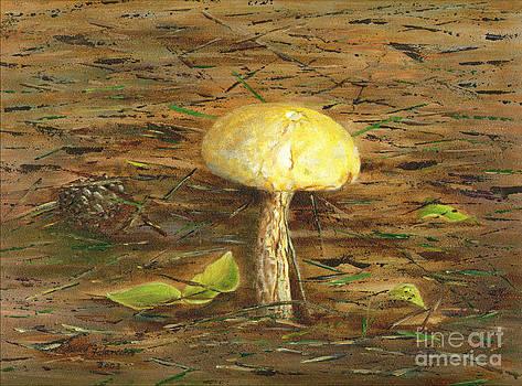 Wild Mushroom on the Forest Floor by Judy Filarecki