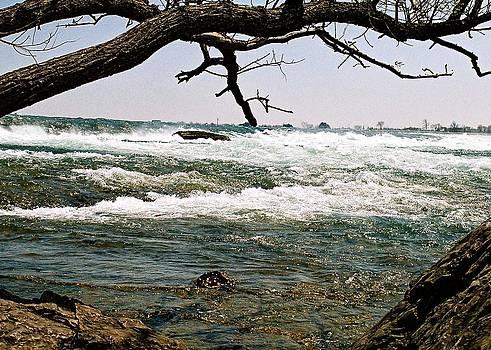 Wild Nature by Jane Bulatnikova