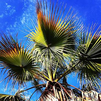 Wild Palm Tree by Ann Marie Donahue