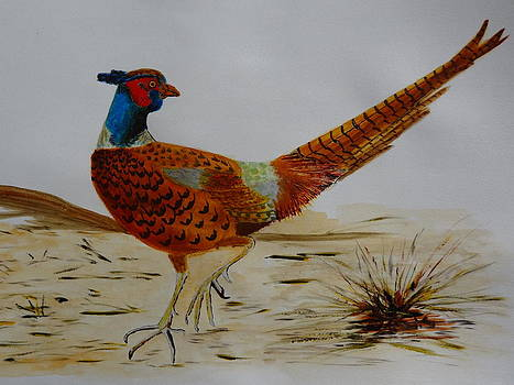 Nancy Fillip - Wild Pheasant