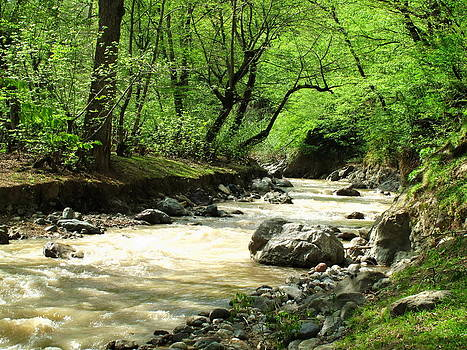 Wild River by Shervin Moshiri