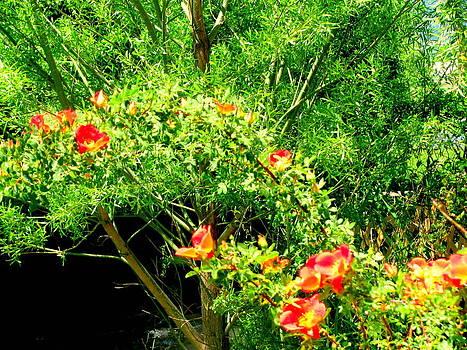 Wild Rose Bush by Amy Bradley