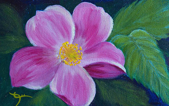 Dee Carpenter - Wild Rose Study 6