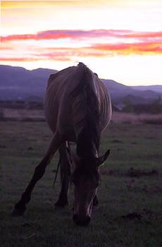 Wild Sunset by Mickey Hatt