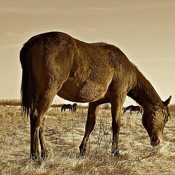 Wild West by Colette Panaioti