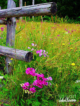 Wildflower at Fence Post  by John Clawson
