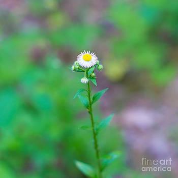Christina Klausen - Wildflower III