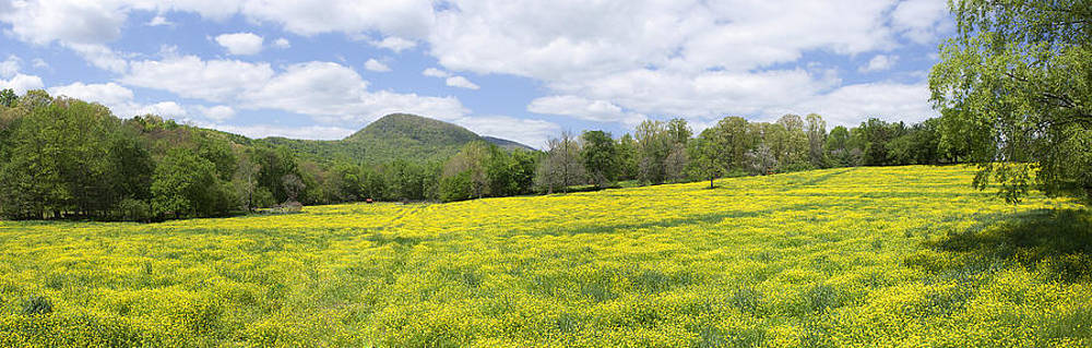 Wildflower panorama by Aaron Adams