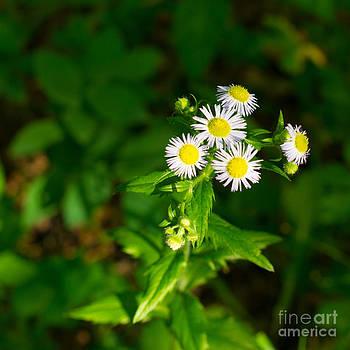 Christina Klausen - Wildflower VIIII