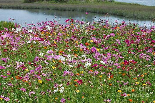 Wildflowers 2 by Tina Shamay