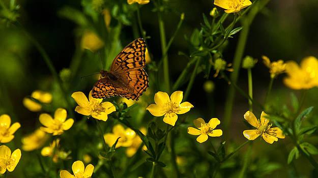 Lisa Moore - Wildflowers and Butterflies