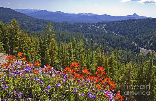 Ellen Thane and Photo Researchers - Wildflowers and Mountaintop View