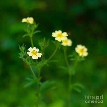 Christina Klausen - Wildflowers I