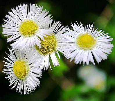Wildflowers by Leslie Ann Hammer